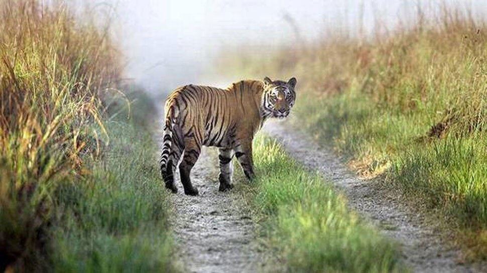 Corbett Tiger Reserve Again Open For Tourists, These Are New Rules