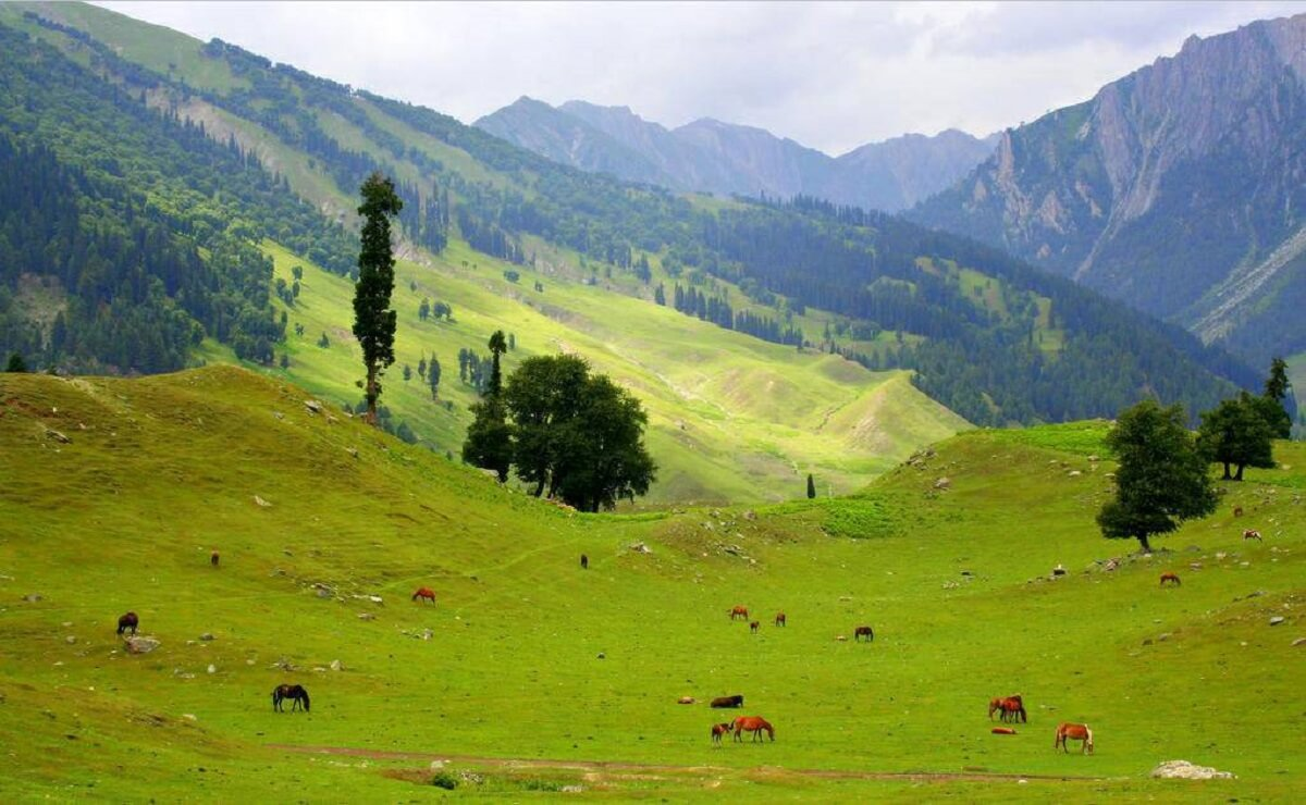 Sonmarg Tour Package