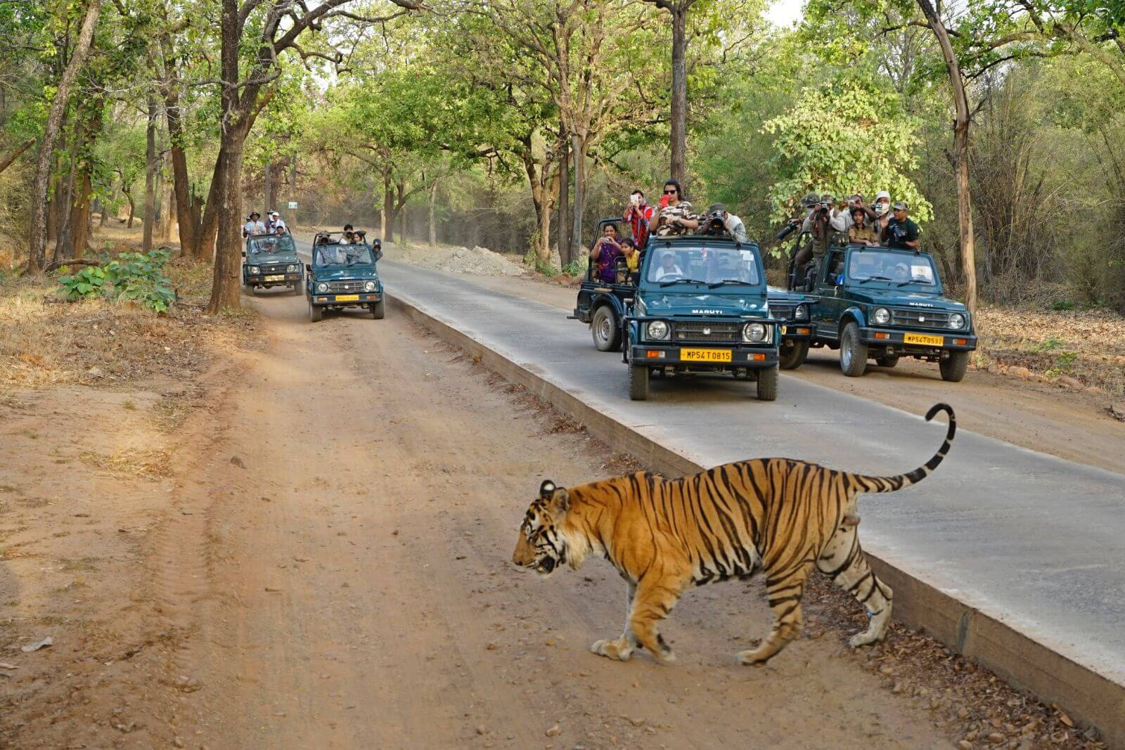 Bandhavgarh National Park Tour Package